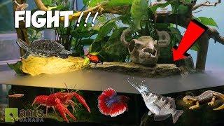 Ants vs. Water Beasts