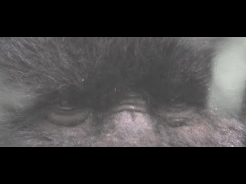 Video Todd Standing's Court Case to Prove Sasquatch exists download in MP3, 3GP, MP4, WEBM, AVI, FLV January 2017