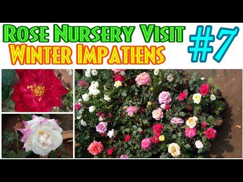 19 - Rose Nursery Visit || Winter Impatiens || Price List ||  Episode. 7 || Rose Garden || Rose Era