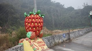 Cameron Highlands Malaysia  City new picture : Cameron Highlands Malaysia