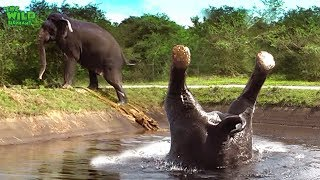 Video Somersaulting elephant saved from a canal MP3, 3GP, MP4, WEBM, AVI, FLV Juni 2018