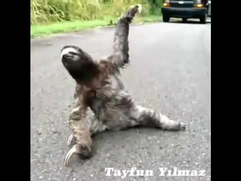 Komik maymunlar Gülmek garanti :)