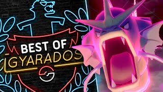 THE BEST OF Gyarados! Pokemon Sword and Shield Wi-Fi Battles! by PokeaimMD