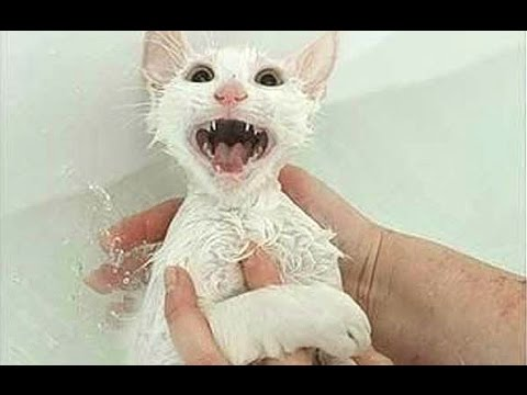 "Cats Saying ""No"" To Bath - A Funny Cats In Water Compilation"