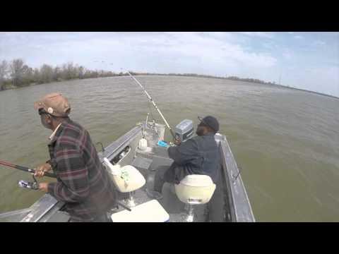 Sandusky bay prespawn channel catfish watch the video for Sandusky bay fishing
