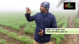 জেনে রাখুন- তীব্র কুয়াশা ও ঠান্ডায় আলুর রোগ, প্রতিকার ও পরিচর্যা- late blight of potato-what to do