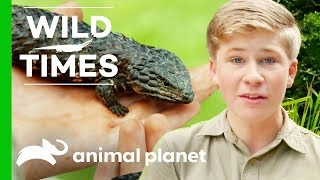 A Season of Wild Times with The Irwins by Animal Planet