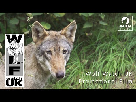 Wolf Watch UK Promotional Film