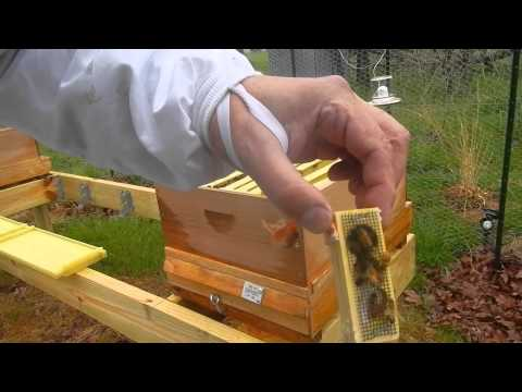 Metropolis Of Propolis Episode 5 Day 5: Are My Bees Dead?
