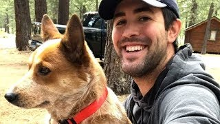 Man Tirelessly Searches For Lost Therapy Dog That Saved Him From A Past Trauma by Did You Know Animals?