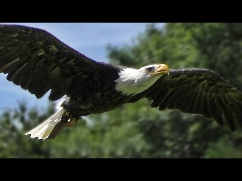 Eagles Dare Slow motion