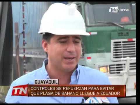 Controles se refuerzan para evitar que plaga de banano llegue a Ecuador