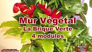 Mur Végétal intérieur 4 modules La Brique Verte