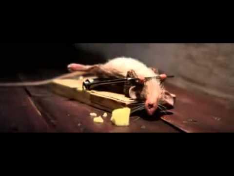 [Clip] Tập thể dục kiểu chuột =))