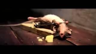 bẫy chuột Đến thượng đế cũng phải cười