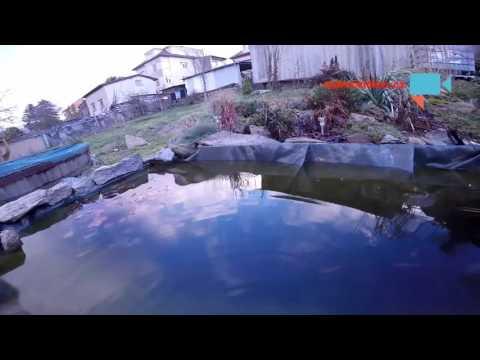 Ryby už se připravují na zimu
