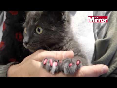 shock! moda o pazzia? le unghie smaltate per gatti e cani