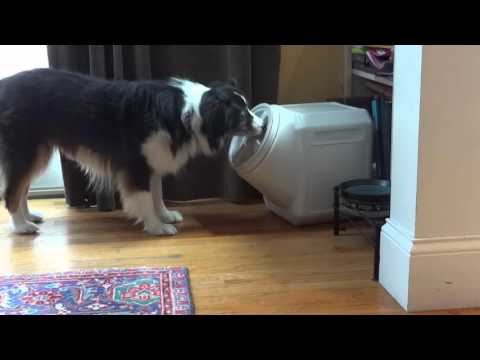 This Guy Bought A Dog Proof Food Box To Keep The Dog Food In. But A Hidden Camera Caught THIS!