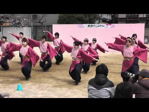 京都チーム「櫻嵐洛」 2012 さくよさ 錦林小学校会場