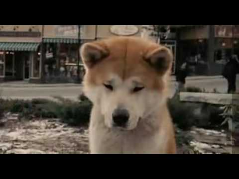 HACHI 約束の犬(2009) Español Latino Fandub