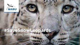 Nur noch 4.000 bis 6.400 Schneeleoparden leben heute in freier Wildbahn. Jeden Tag wird einer von ihnen getötet. Unterschreibt...