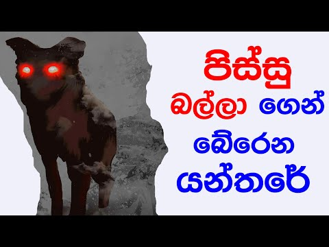 How to protect yourself from mad dogs | sinhala
