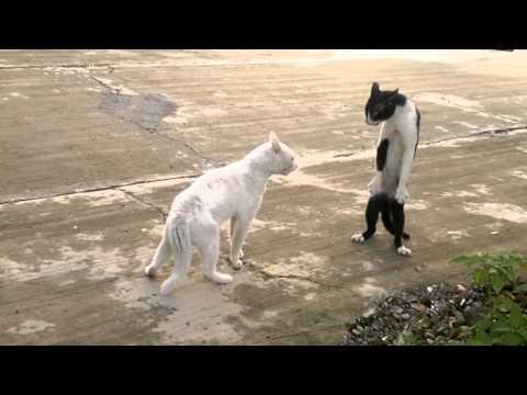 生氣的貓咪竟然擺出驚人的姿勢!難道是外星貓?
