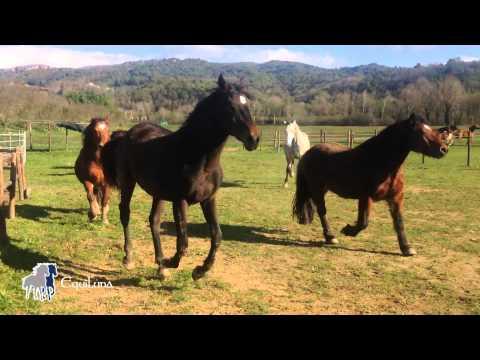 Libertà di muoversi e relazionarsi: questa è vita per i cavalli!