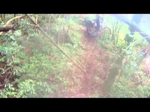 trilhando em guatambu