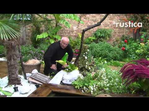 Comment soigner agapanthe la r ponse est sur for Soigner amaryllis