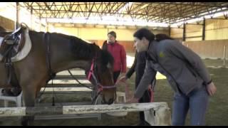 L'ippoterapia. Parte 1 - Il cavallo
