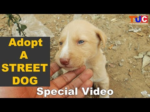 Adopt A Street Dog : TUC's Special Video : The Ultimate Channel