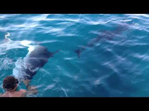 or der Küste von Golfo Aranci hat sich in den ruhigen Gewässern seit einigen Jahren eine Fischfarm angesiedelt.
