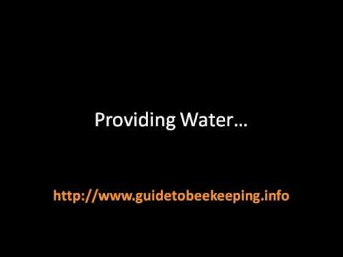 Beekeeping Class – 3 Things That Could Be Done For Backyard Beekeeping