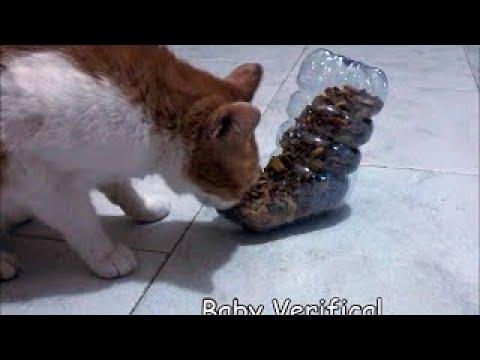 Dispenser  Crocchette per gatto - Fai da te - #Diy - Tutorial