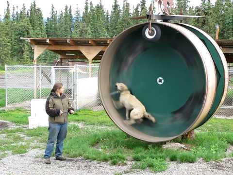 vídeo de un perro ejercitándose como si fuera un hamster