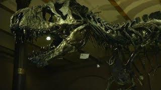 Wissenschaftler der Universität Manchester wollen endlich die Schwachstelle des berüchtigtsten Raubsauriers aller Zeiten entdeckt haben. Demnach war das Tier nicht so schnell, wie bisher angenommen.