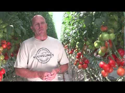 Houweling's Tomatoes: World's Greenest Greenhouse