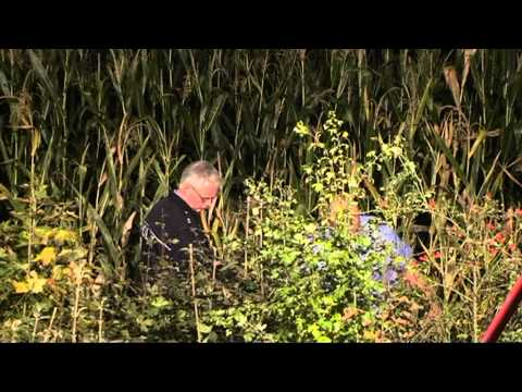Berndorf: Gegen Baum, Fahrer stirbt