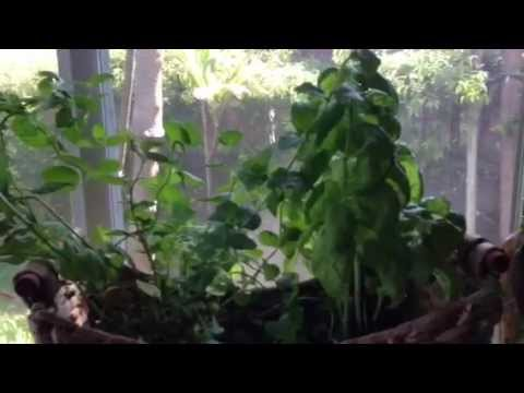 How to Grow Herbs Indoors the Easy Way