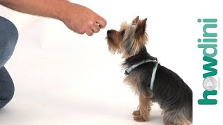 Dog Training Tips: How To Train A Puppy To Sit