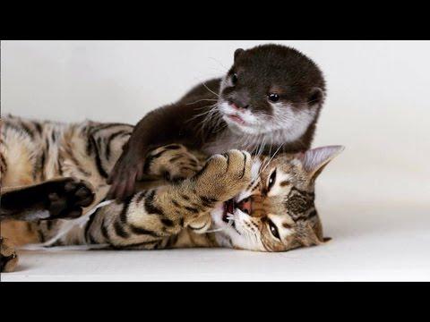 kot-i-wydra-tworza-sympatyczna-pare-najlepszych-przyjaciol