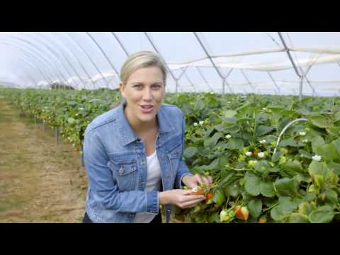 Driscolls – Fast Fact – Strawberry Ripening | Everyday Gourmet S6 EP50