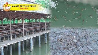 Video Bisnis Sampingan LONGYAM & Pembesaran Ikan Lele 2-3 Bulan Panen Rp.5jt MP3, 3GP, MP4, WEBM, AVI, FLV Juni 2019