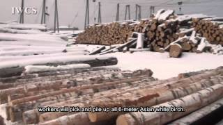 Logging Process at Changbai Mountain