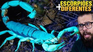 Você já viu um ESCORPIÃO azul? Os escorpiões mais diferentes do mundo