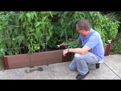 How to garden: Starting a Vegetable Garden