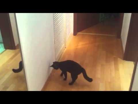 Söt katt med lite studs i benen