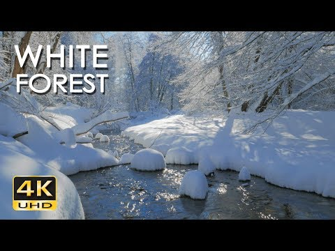 4K White Forest - Calming River Sounds - Snowy Woods - Relaxing Winter Nature Video - Ultra HD
