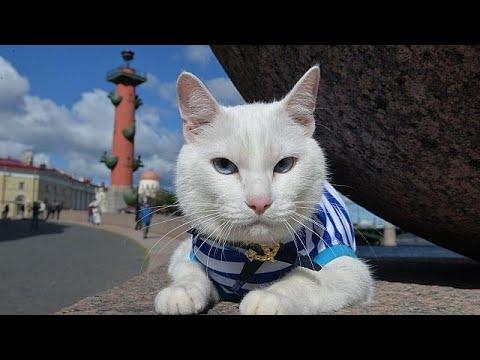 Ο μάντης γάτος Αχιλλέας και τα προγνωστικά του Μουντιάλ…